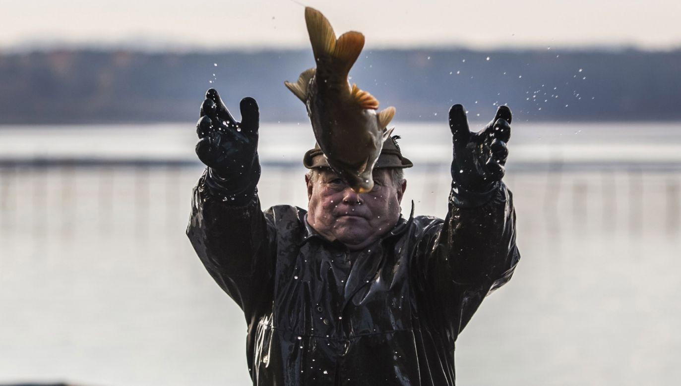 Wykorzystanie stawów do produkcji innych ryb niż karpie czy pstrągi jest trudne i nie przynosi dobrych efektów ekonomicznych (fot. Matej Divizna/Getty Images)