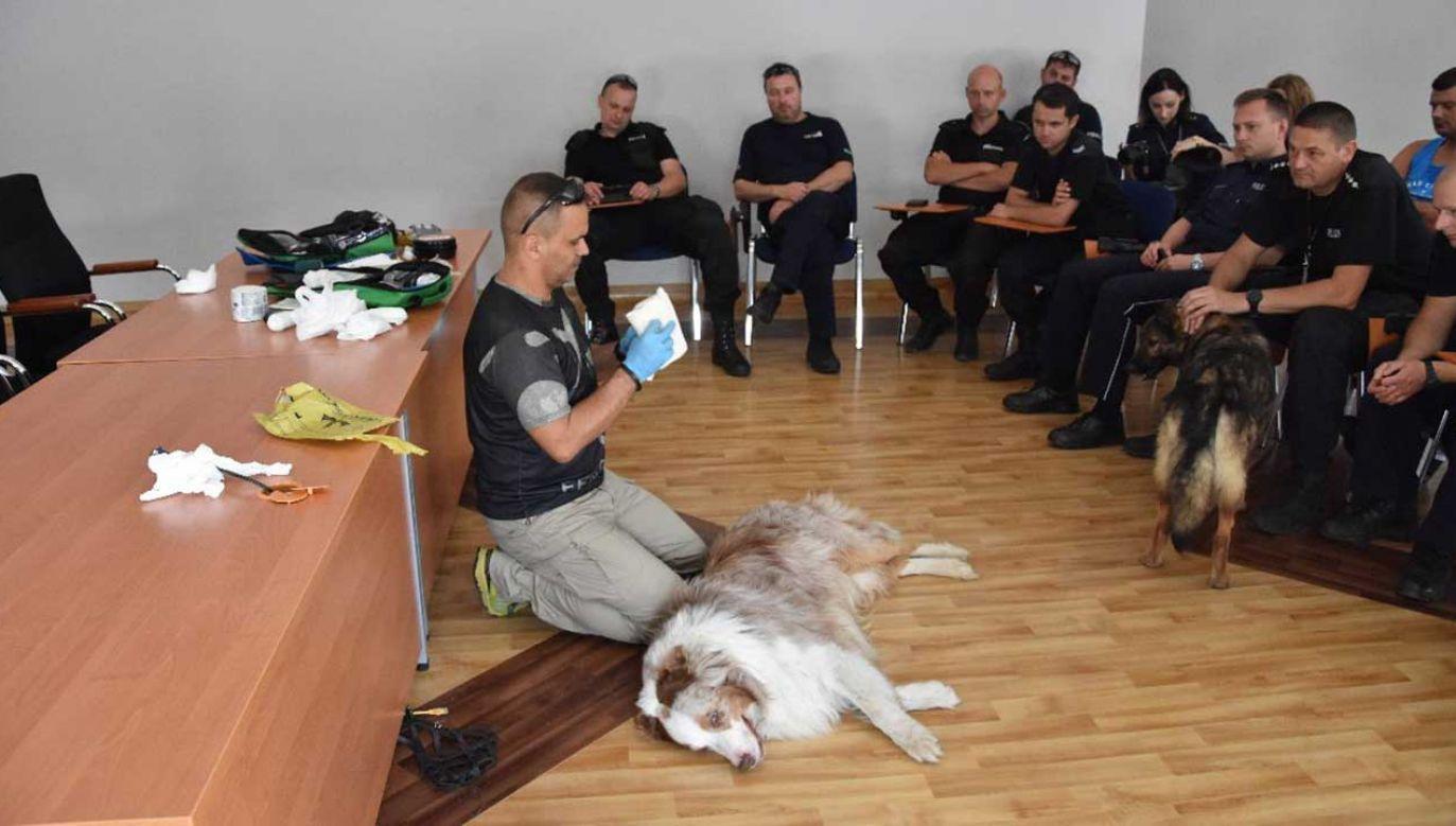 W szkoleniu cierpliwie uczestniczył 9-letni owczarek australijski Bono (fot. KMP Zielona Góra)