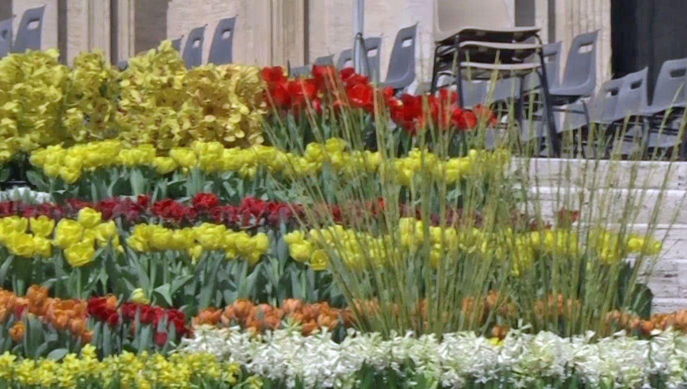 Holenderscy dostawcy w tym roku dostarczyli prawie 55 tys. kwiatów (fot. TVP)