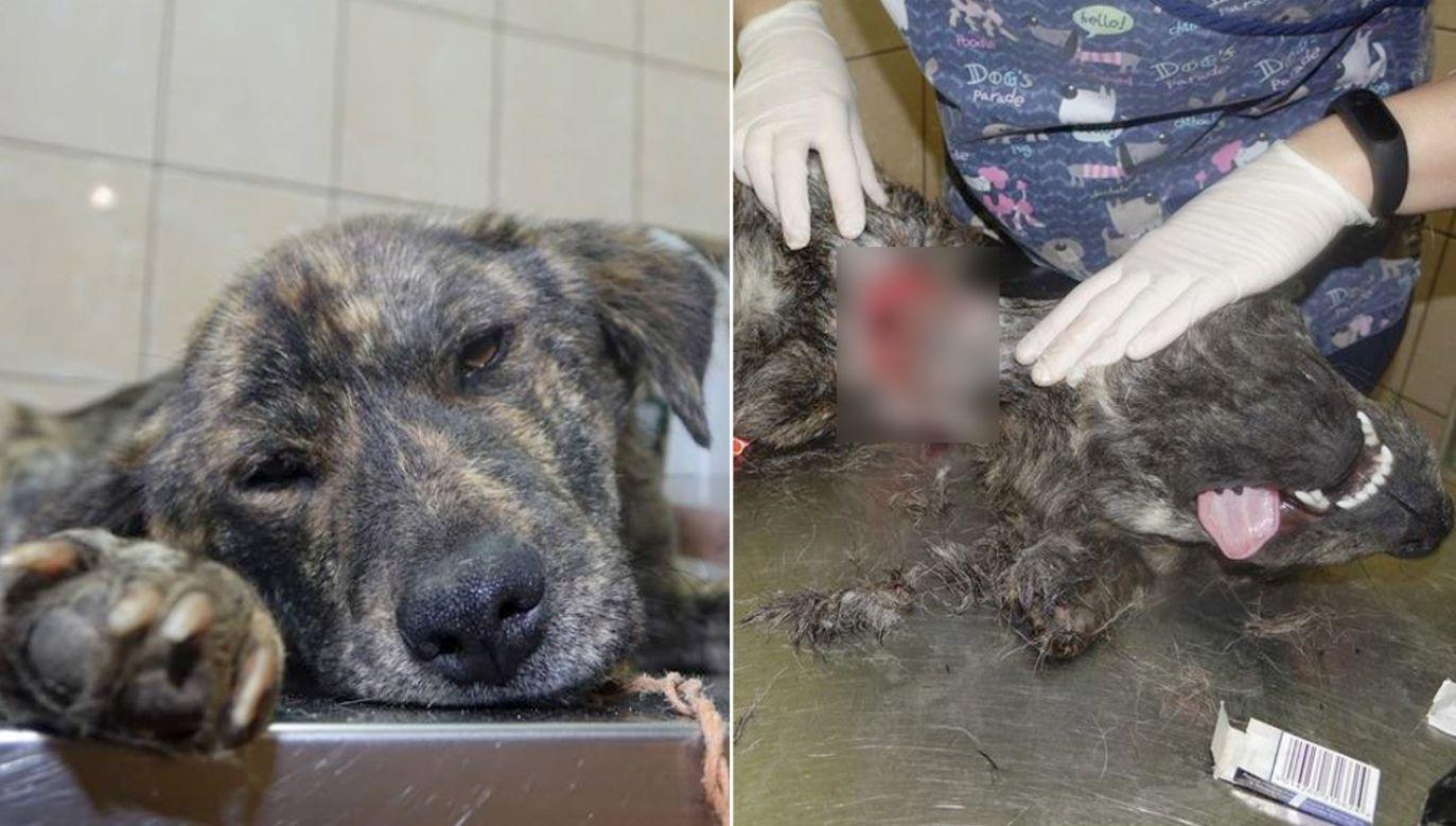 Stan psów jest bardzo poważny a rokowania złe (fot. FB/Pogotowie dla Zwierząt)