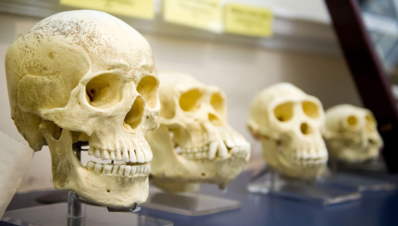 W trudnych warunkach Homo erectus czy denisowiańczycy tak dobrze sobie nie radzili (fot. Shutterstock/JuliusKielaitis)