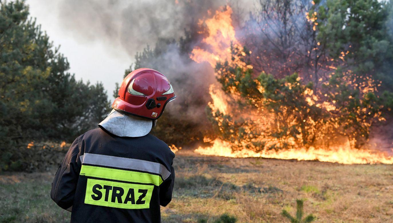 Pożar lasu w dzielnicy Fordon w Bydgoszczy (fot. PAP/Tytus Żmijewski)