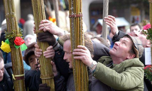 Do  przedłużenia palmy i jej wzmocnienia używa się drewnianej tyczki. Palma musi zachować swoją smukłość, nie może to być niezgrabny kloc – na wysokości jednego metra mężczyzna musiał ją objąć swoimi dłońmi. Palmy wokół bł. Szymona na lipnickim Rynku 20 marca 2005 r. Po raz 47. w Lipnicy Murowanej (woj. małopolskie) w Niedzielę Palmową odbył się Konkurs Palm Wielkanocnych. Tego  roku najdłuższa palma mierzyła blisko 30 metrów. Fot. PAP/Jacek Bednarczyk