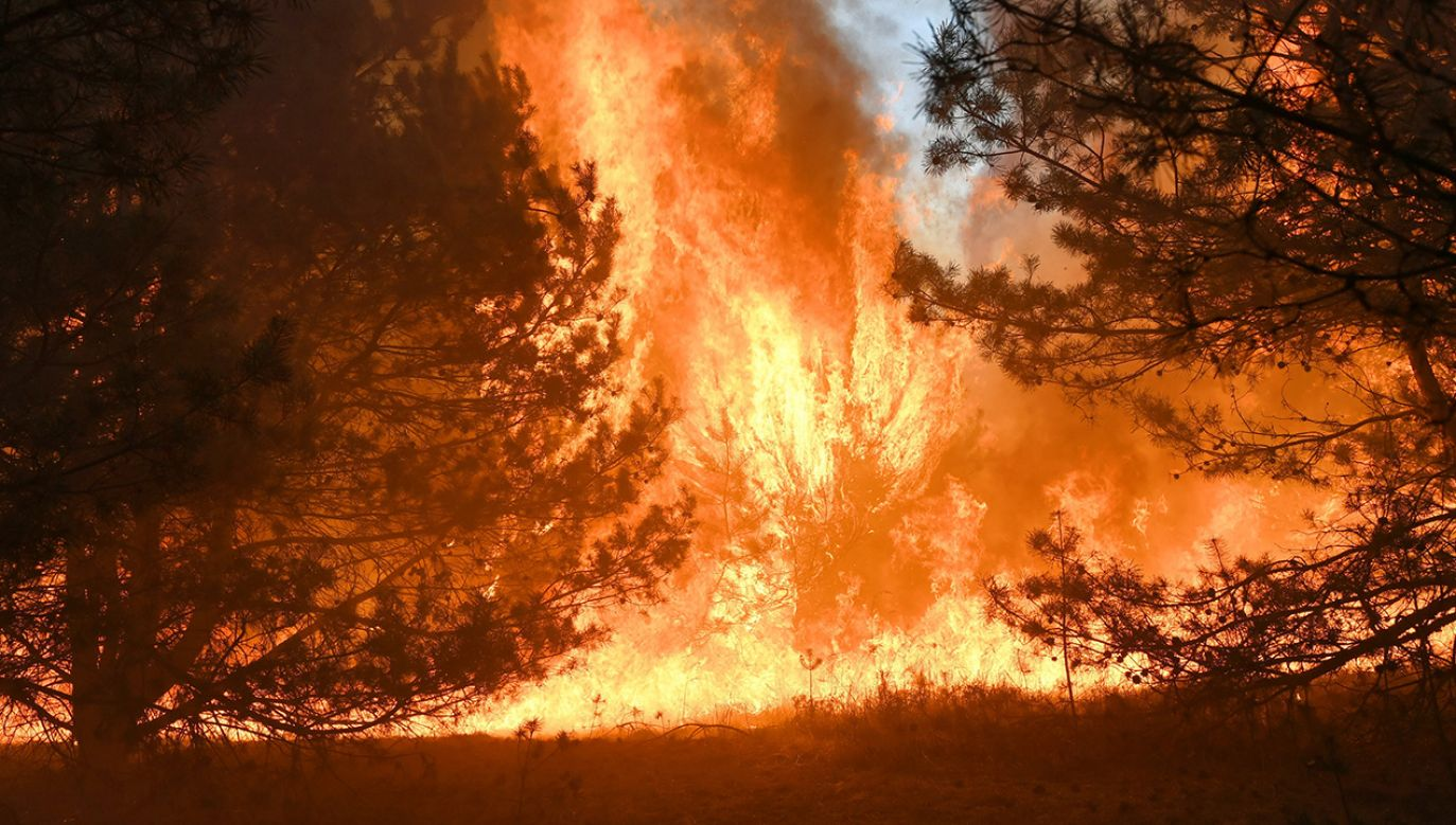 Na miejscu pracuje kilknaście zastepów straży pożarnej (fot. PAP/Tytus Żmijewski)
