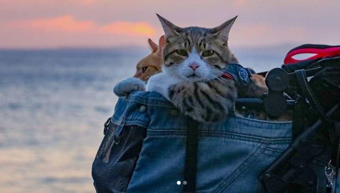 Razem z właścicielem zwiedzili już 47 prefektur w Japonii (fot. Instagram/ the.traveling.cats)