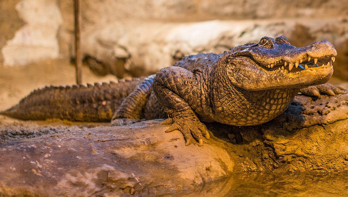 Jubilatka to najstarsze zwierzę w ogrodach zoologicznych w Europie (fot. ZOO Płock)