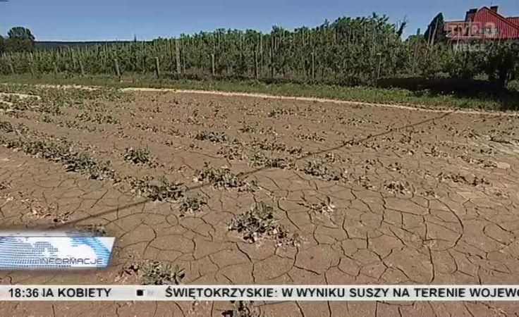 Raport o skutkach suszy. Straty idą w miliony złotych