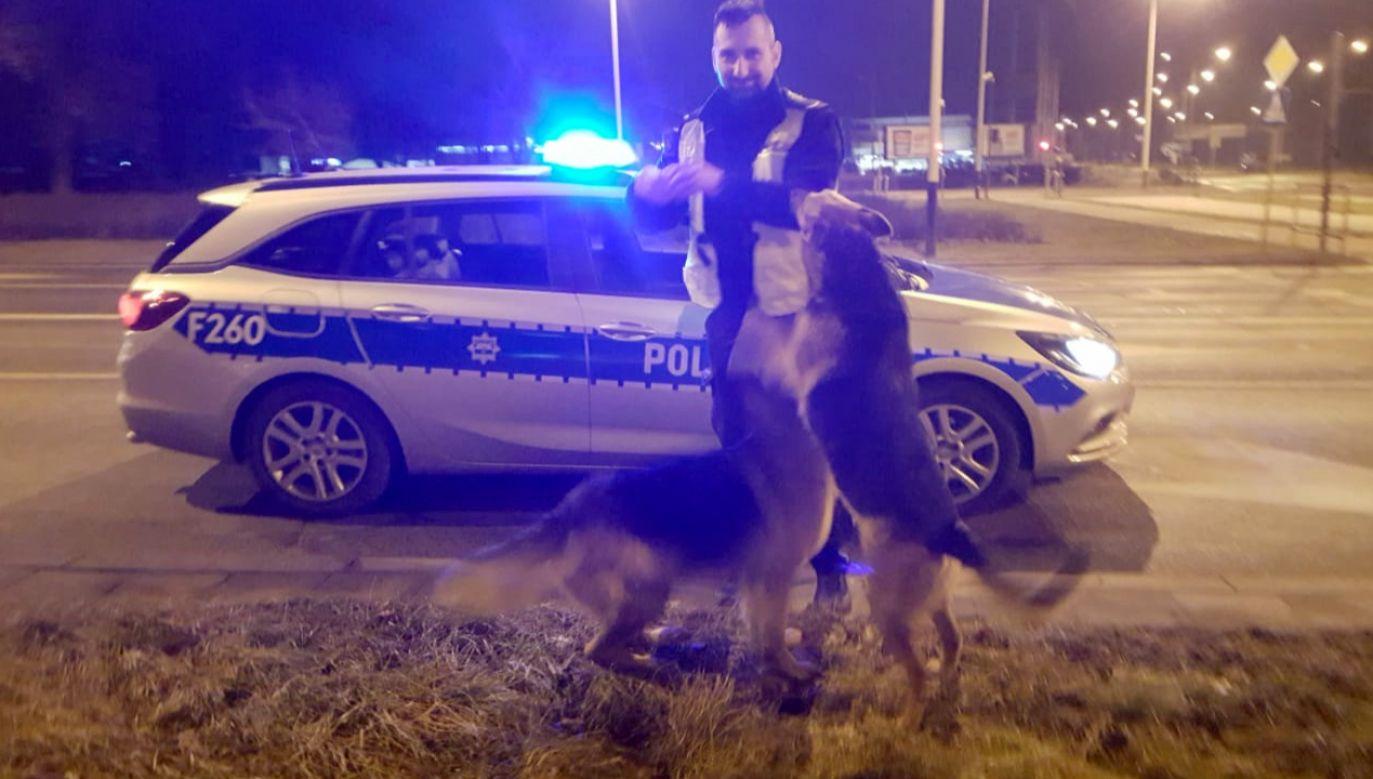 Psy ufnie podeszły do policjanta (fot. lodz.policja.gov.pl)