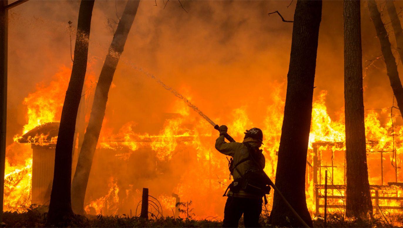 Z żywiołem walczy ponad 3 tys. strażaków (fot. PAP/EPA/PETER DASILVA)