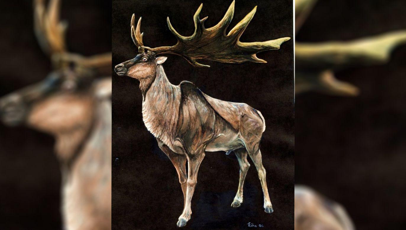 To największy gatunek jeleni, jaki kiedykolwiek istniał (fot. Pavel Riha/Wikimedia)