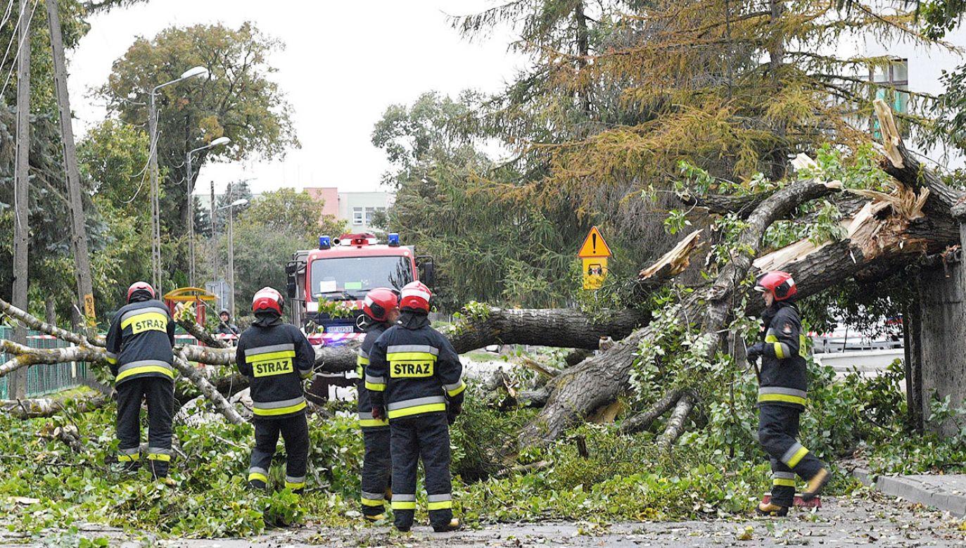 Strażacy usuwają drzewo, które złamało się podczas wichury, jaka przeszła nad Przemyślem (fot. PAP/Darek Delmanowicz)