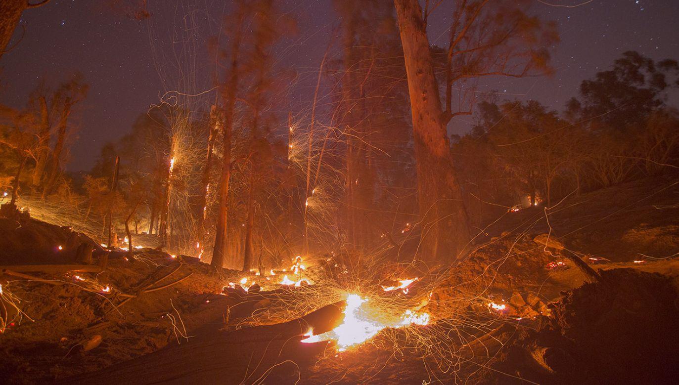W akcji gaszenia przy użyciu wozów straży pożarnej, helikopterów i specjalnych buldożerów uczestniczy ponad 230 strażaków (fot. David McNew/Getty Images)