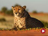 Namibia. Ponadczasowa Afryka