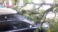 Złamane konary uszkodziły kolejne auto w Bydgoszczy (fot. Łukasz Opara)
