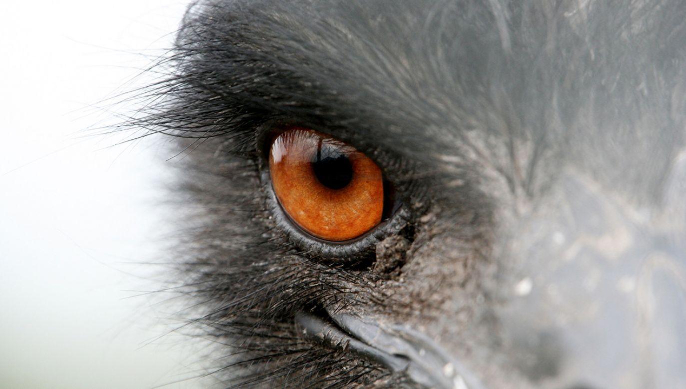 W przeciwieństwie do nas, ptaki nie widzą w koronie drzewa zbitej zielonej masy (fot. arch. PAP/Lech Muszyński)