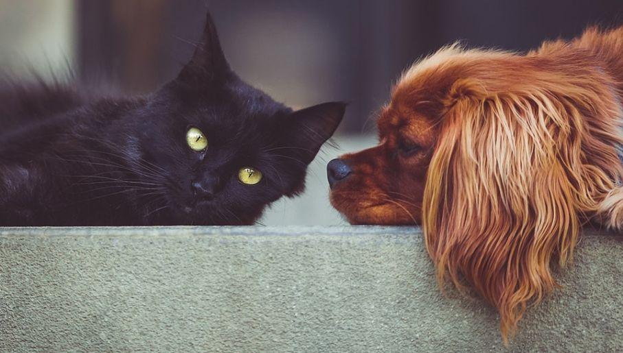 Psy Czy Koty Nowe Badania Dowiodły Które Zwierzęta Są Mądrzejsze