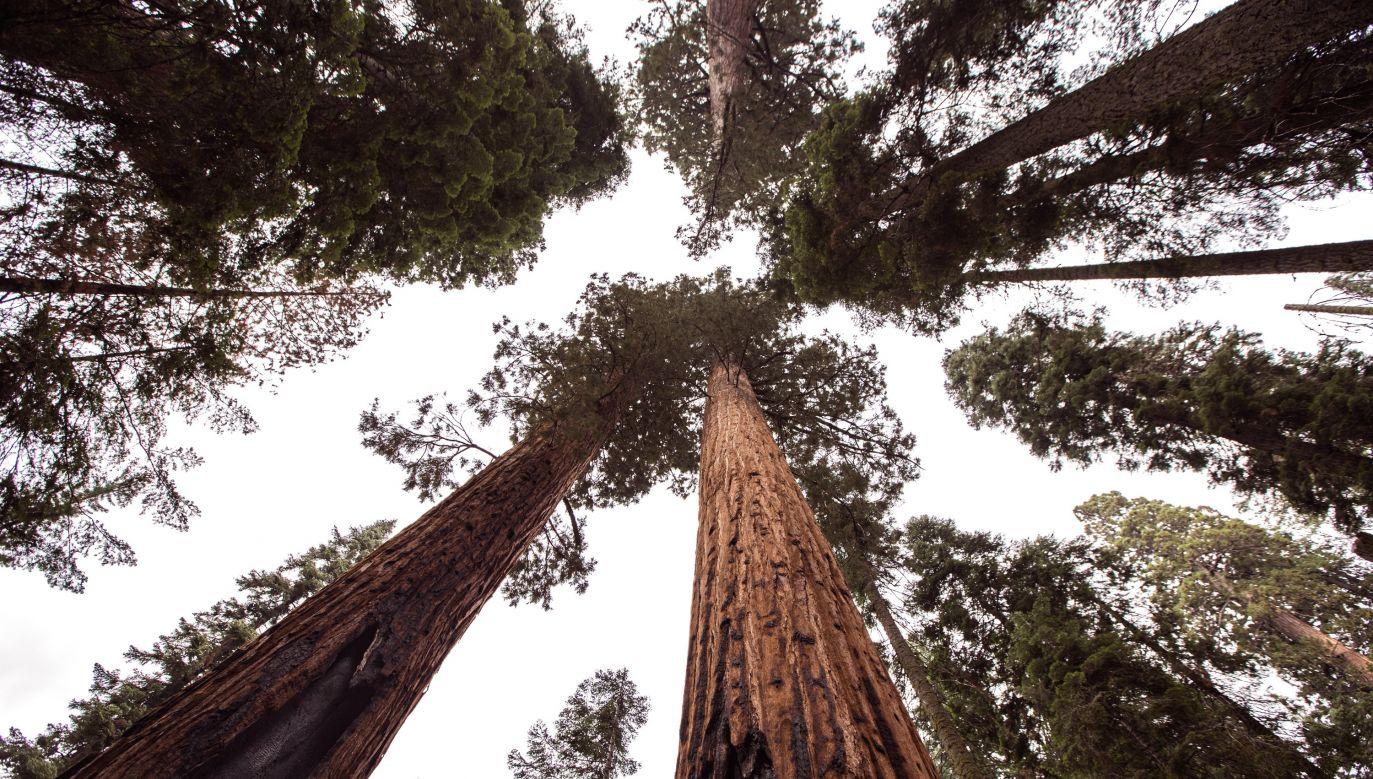 Konkretne grupy ekologiczne symbiontów okazały się też wg autorów właściwe dla lasów konkretnych stref klimatycznych (fot. unsplash.com/Vladimir Kudinov)