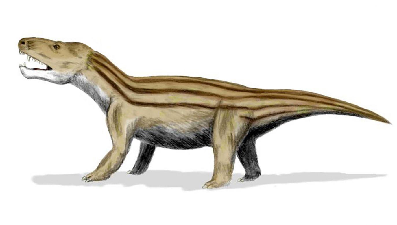 Cynodont (fot. Wikipedia/Nobu Tamura)