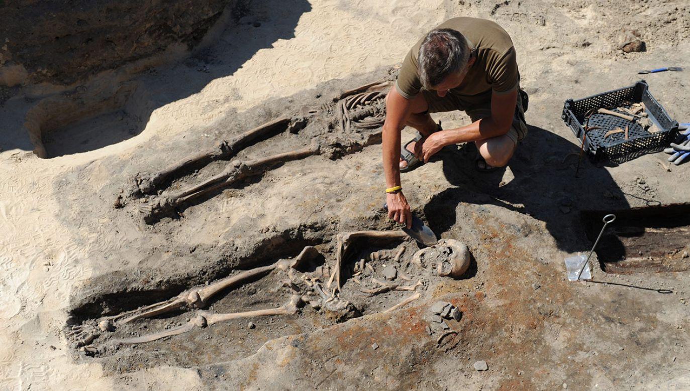Szczątki odkryli archeolodzy w 2014 r. w Kamieniu Pomorskim (fot. arch.PAP/Marcin Bielecki)