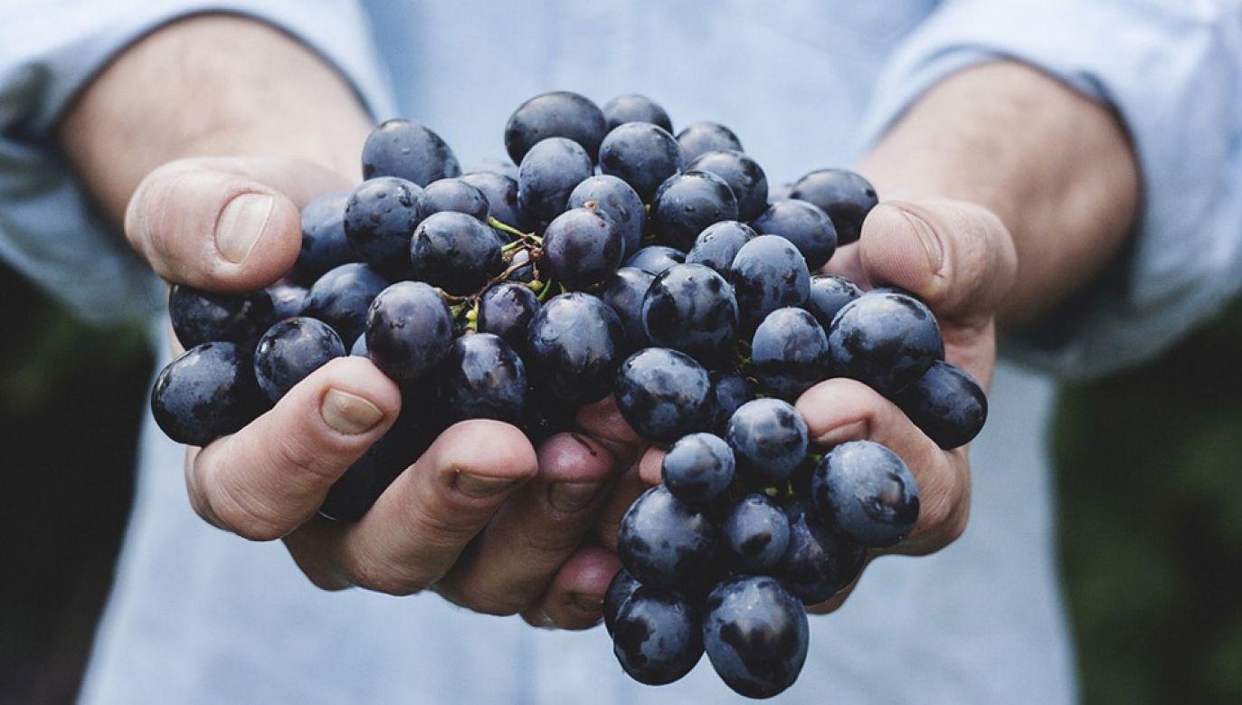 Pierwsze butelki młodego wina trafią do handlu na początku listopada (fot. Pixabay)