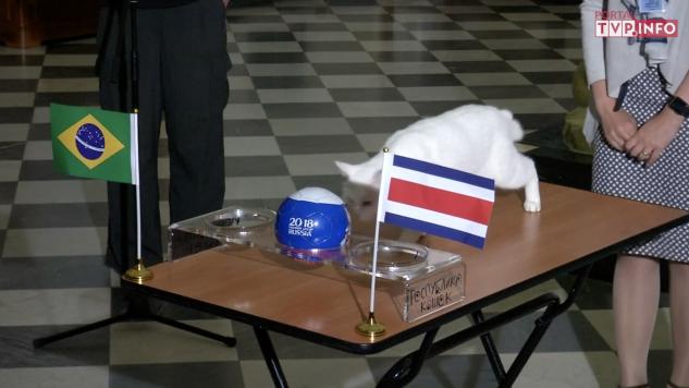 Kot przewiduje wynik spotkania Kostaryki z Brazylią