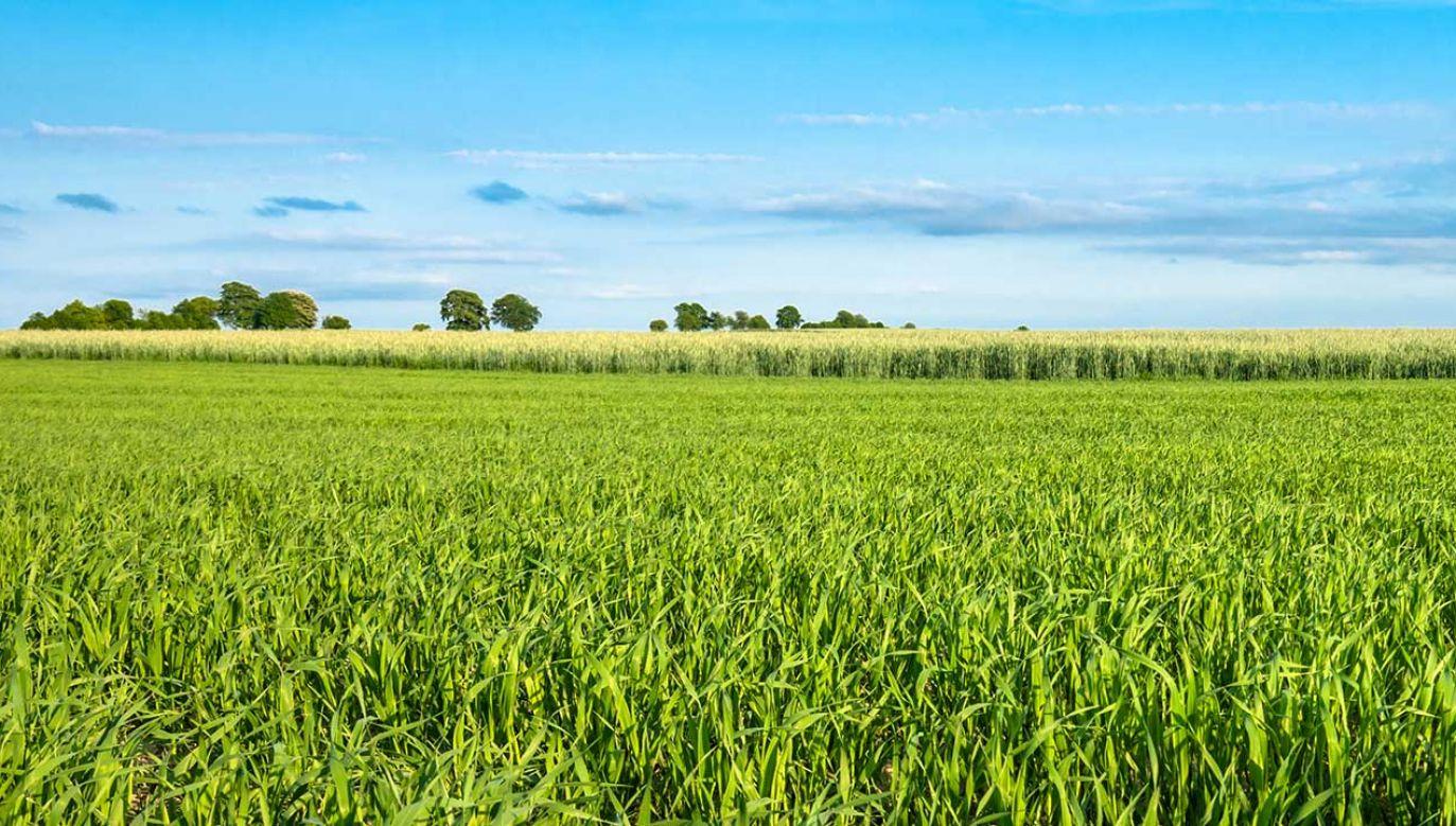 W 2002 r. Morawiecki i jego żona kupili 15 ha gruntów na wrocławskim Oporowie  (fot. Shutterstock/alicja neumiler)