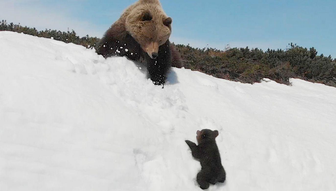 Walka ze śnieżną górą zakończyła się sukcesem (fot. tt/@ziyatong)