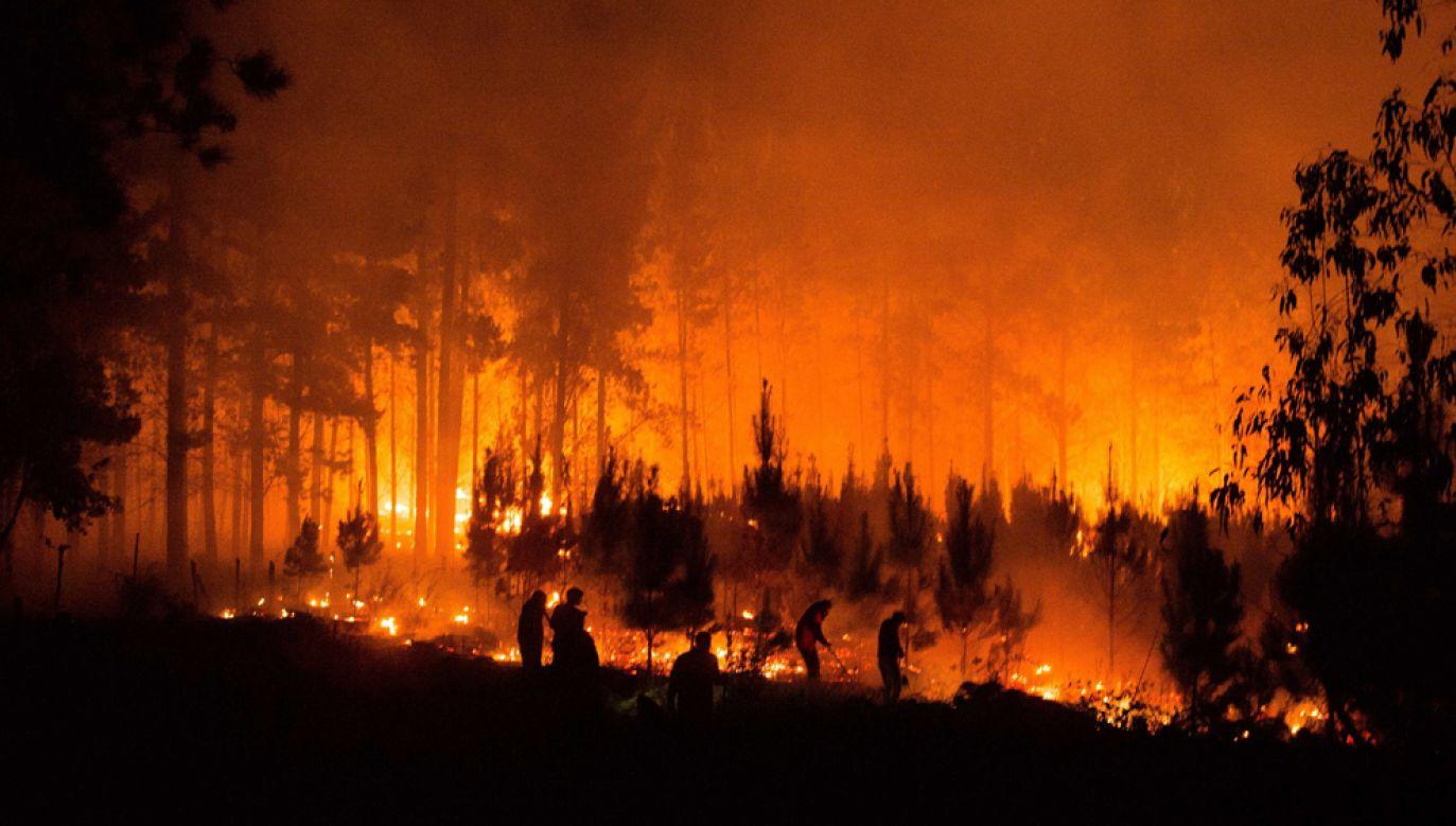 Chociaż do walki z żywiołem rzucono wszystkie dostępne środki, ogień ogarnia coraz rozleglejsze tereny leśne(fot. PAP/EPA/CAMILO TAPIA)