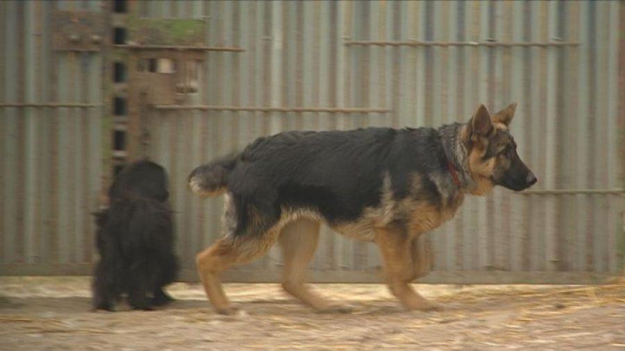 Rewelacyjny Złe warunki hodowli psów. Kontrola służb weterynaryjnych - TVP3 SY18