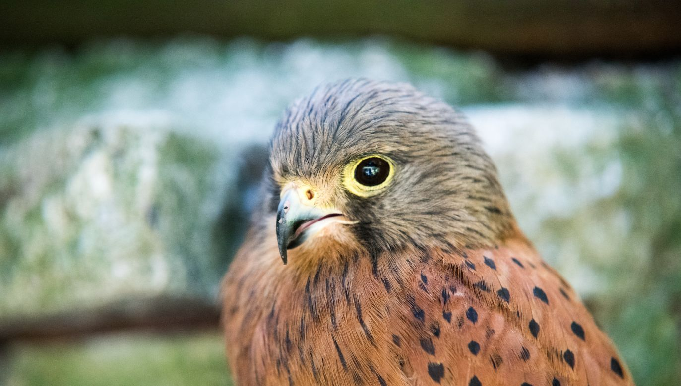 Sąd skazał trzech mężczyzn za otrucie 142 ptaków (fot. unsplash.com/Viktor Jakovlev)