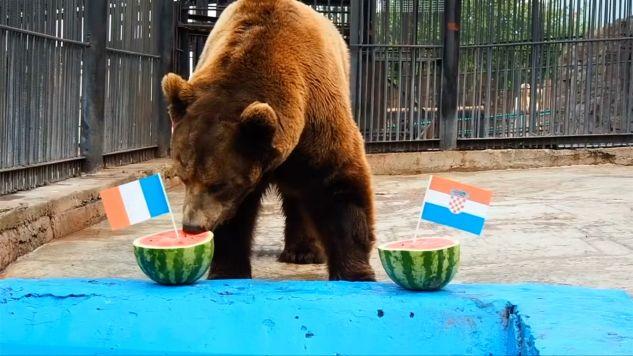 Niedźwiedź wskazał mistrzów świata (fot. Reuters)