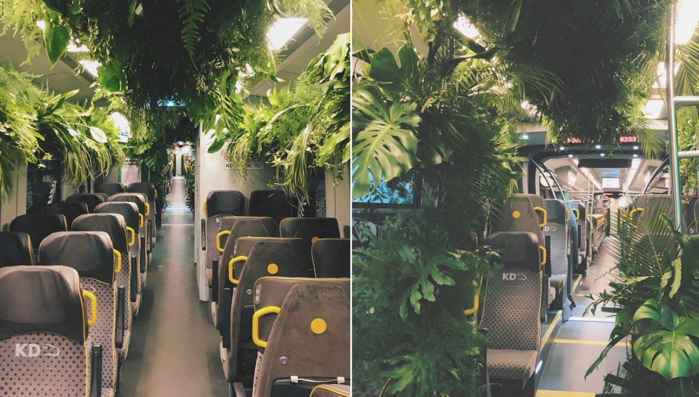 W pociągu Kolei Dolnośląskich rośliny wypełnią całą przestrzeń środkowego wagonu, co ma zapewnić podróżnym niezapomniane przeżycia (fot. tt/@KolejeD)