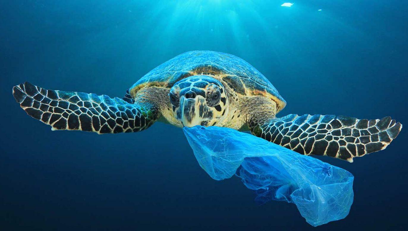 Nowy preparat degradujący plastik w środowisku (fot. Shutterstock/Rich Carey)
