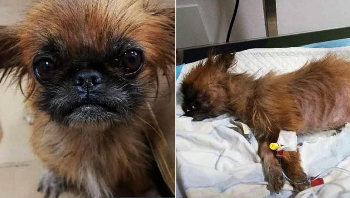 Pies znajdował się w zawiązanym worku (fot. wloszczowa.swietokrzyska.policja.gov.pl)
