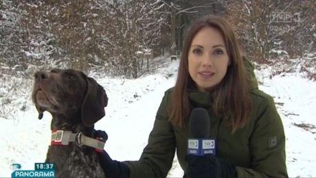 Czym grozi trening z psimi zaprzęgami w lesie
