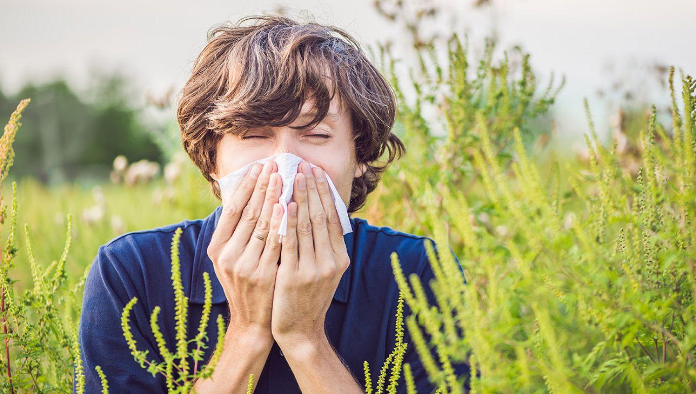 40 proc. naszego społeczeństwa ma alergiczny nieżyt nosa (fot. Shutterstock/ Elizaveta Galitckaia)