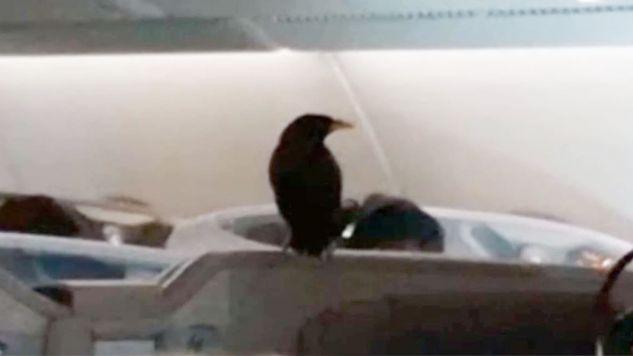Incydent został sfilmowany przez jednego z pasażerów (fot. FB/FABRICATIONS ABOUT THE PAP)