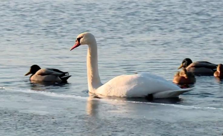 Ptaki do liczenia. Miłośnicy ornitologii odnotowali egzotyczne gatunki