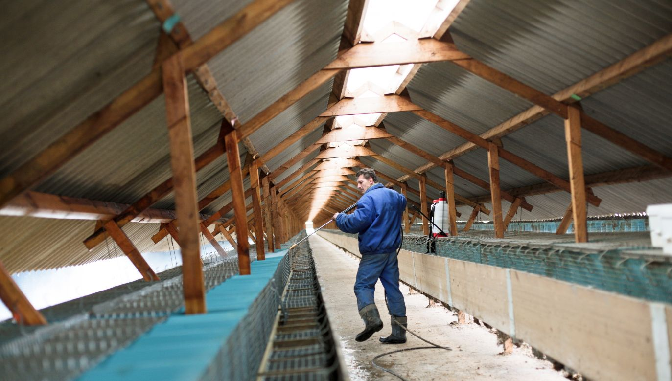 Mink farms remain one of the more common sources of nuisance caused by unpleasant odors. Photo: PAP/Lech Muszyński