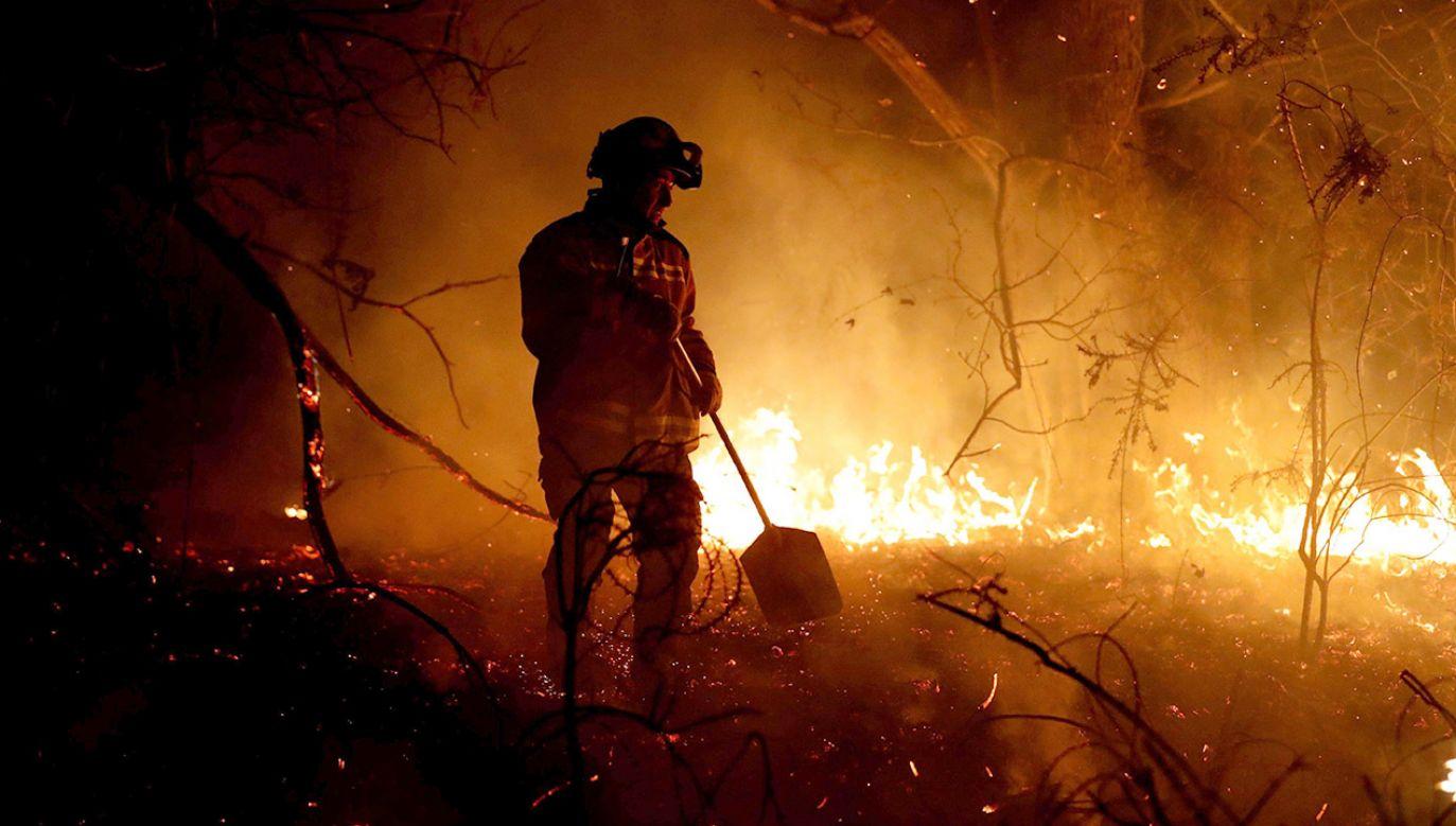 Ogień strawił tysiąc hektarów lasu (fot. arch.PAP/EFE, zdjęcie ilustracyjne)