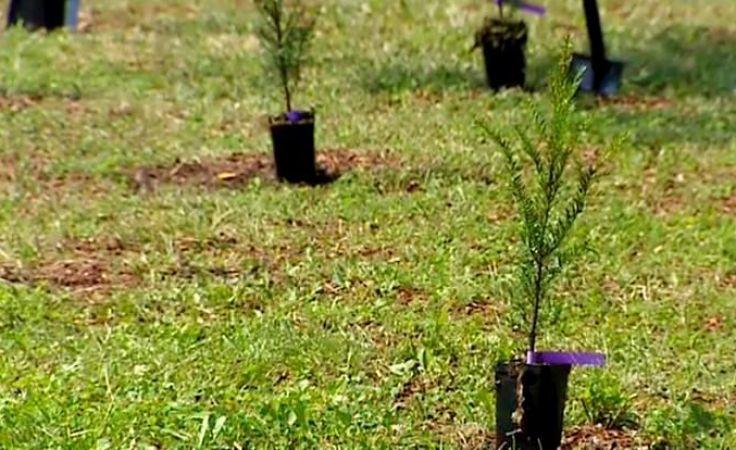 Sobotnie sadzenie rozpocznie się o godz. 10 (fot. arch. TVP)