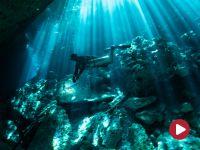 Ziemia. Podwodny świat, Rajski Ogród i Dedalus