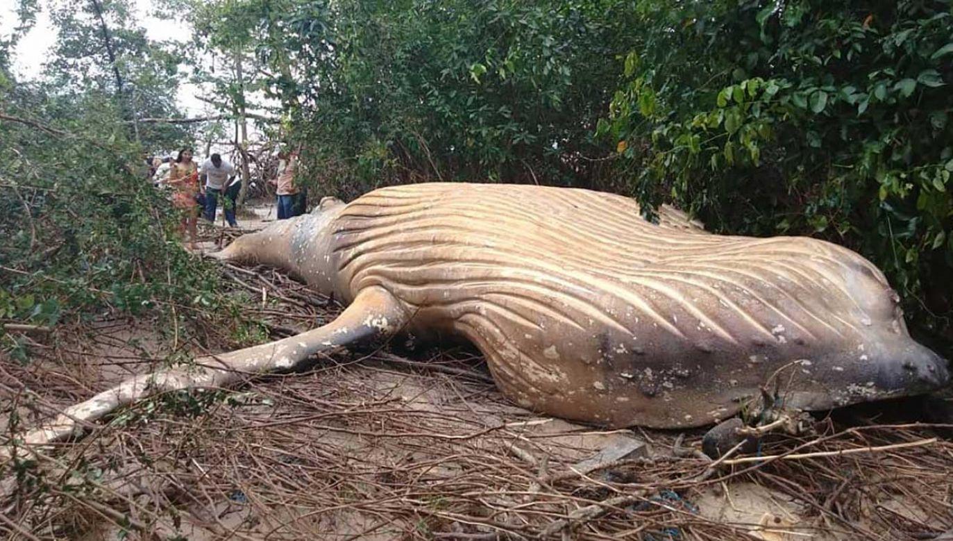 Ocean wyrzucił na brzeg wieloryba (fot. Instagram/bicho_dagua)