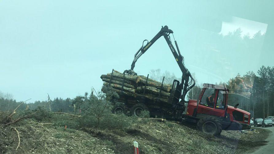 Zezwolenie na wycinkę wydał wojewoda pomorski (fot. TT/MarcinBk1)