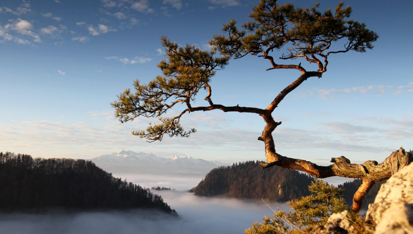 The picture appeared in postcards and was a trademark of the Pieniny mountains. Photo: PAP/Grzegorz Momot