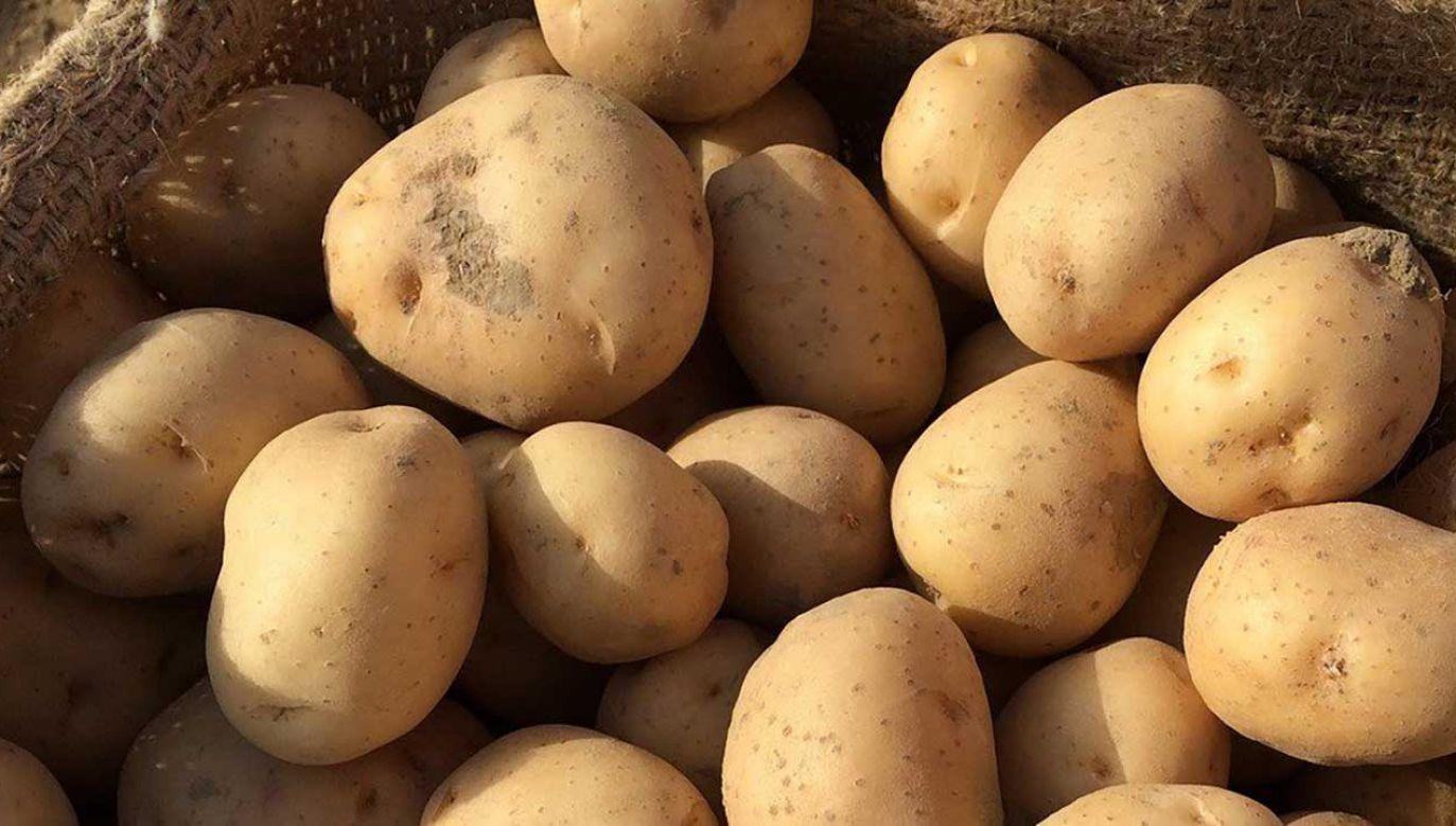 Chodzi o to, by konsumenci wiedzieli, skąd pochodzi ziemniak (fot. TT/Ministerstwo Rolnictwa i Rozwoju Wsi)