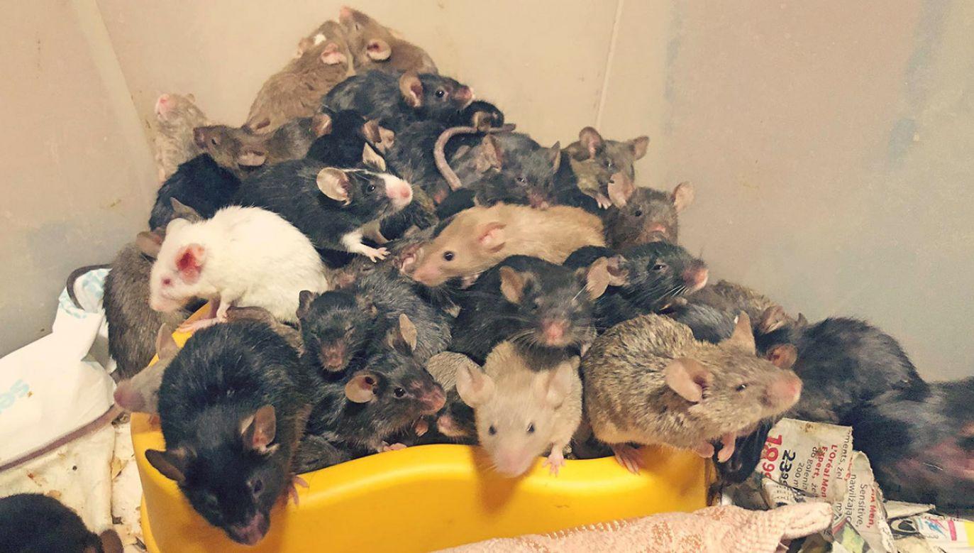 Zabranie wszystkich zwierząt zajęło dwa dni (fot. FB/EKOSTRAŻ)