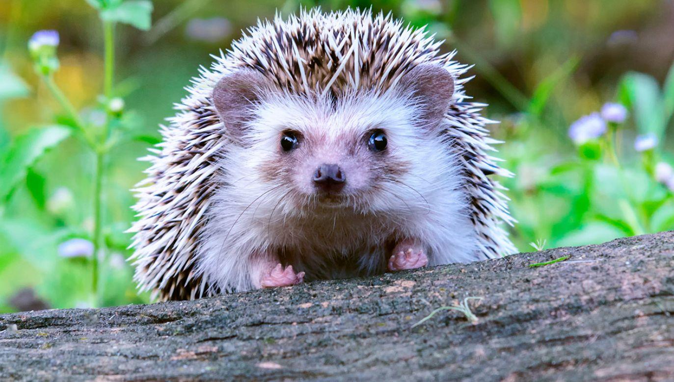Zwierzęta nie przeżyły spotkania z nastolatkiem (fot. Shutterstock/supakrit tirayasupasin)