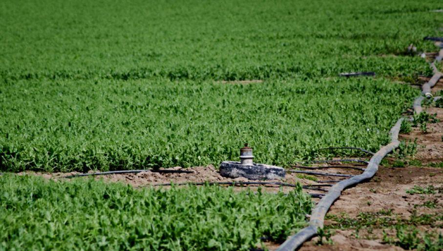 a5479f70f0fabe Do fałszowania środków ochrony roślin dochodzi w całej Europie (fot.  flickr.com/USDAgov)