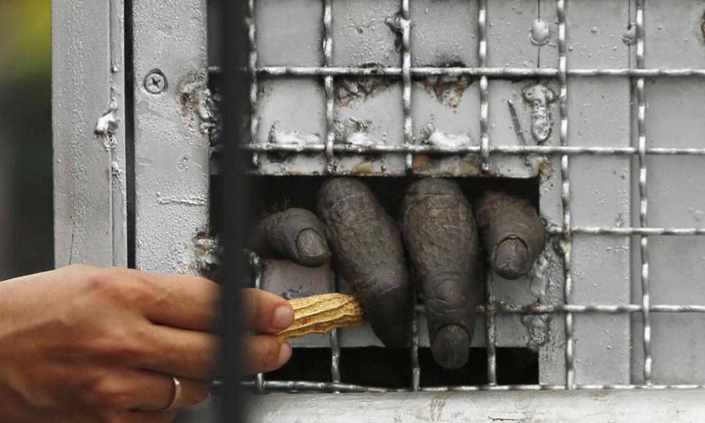 (fot. REUTERS/Beawiharta)